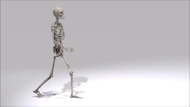 Digital 3D Animation of a walking Skeleton Digital 3D Animation of a walking Skeleton animal skeleton stock videos & royalty-free footage