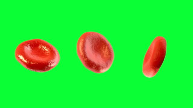 vídeos de stock e filmes b-roll de digital 3d células do sangue contra tela verde - glóbulo vermelho