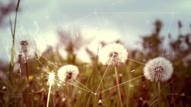 Digital abstract nature complexity concept with dandelions