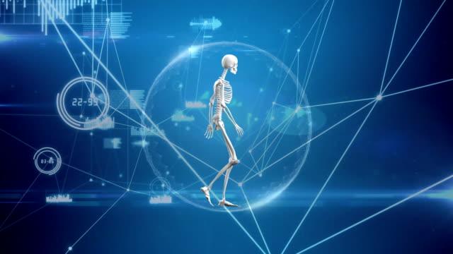 digital composite of a human skeleton in a network bubble - rappresentazione umana video stock e b–roll