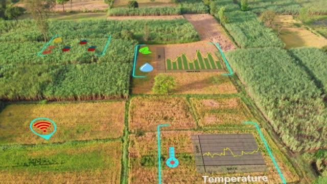 digital farming and virtual reality technology - gospodarstwo ekologiczne filmów i materiałów b-roll
