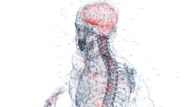 vídeos de stock, filmes e b-roll de corpo humano digital - estrutura física