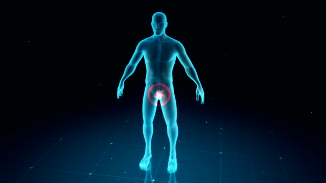 Digital human body with visible pain in different places, 6 different options video