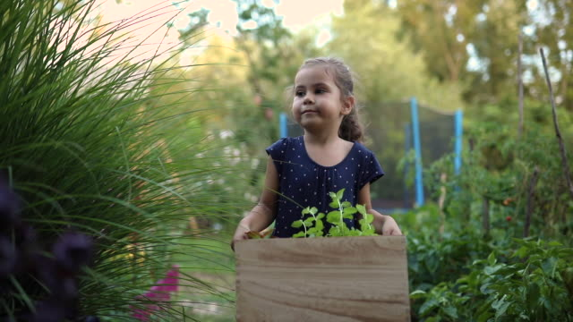 diligent 5 year's old girl in a dress carrying a wooden crate with herbs - gardening video stock e b–roll