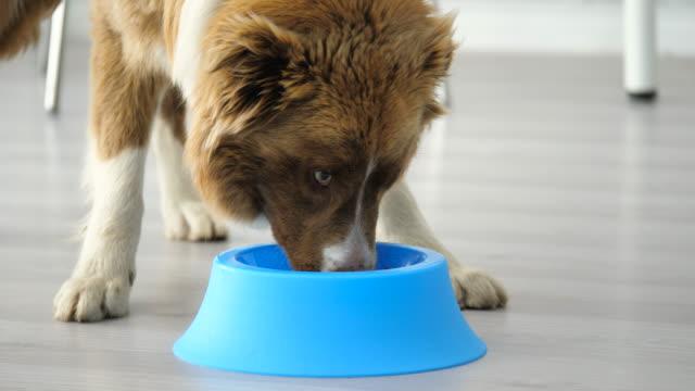 vídeos de stock e filmes b-roll de dinner time - dog food