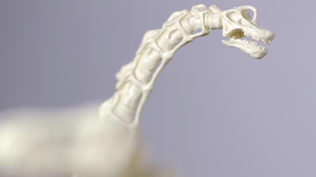 dino plastic figures rack focus (hd, pal) - tyrannosaurus rex bildbanksvideor och videomaterial från bakom kulisserna
