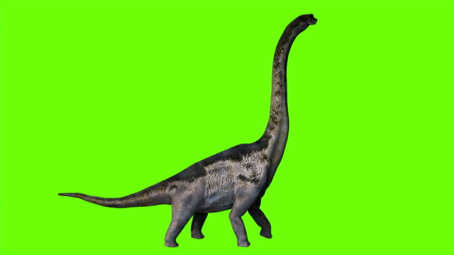 dinosaur braquiossauro animation on green screen. realistic render - dinosaur stock videos and b-roll footage