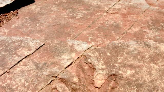 Empreinte de pas de dinosaure - Vidéo