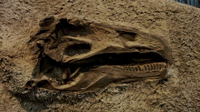 dinosaur skull - dinosaur stock videos and b-roll footage