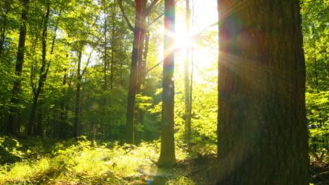 vídeos de stock e filmes b-roll de carrinho de hd: luz directa do sol na floresta verde - floresta