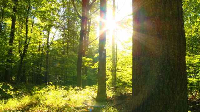 DOLLY HD: La luz directa del sol en el bosque verde - vídeo