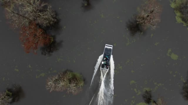 directly overhead aerial drone shot of an airboat speeding between cypress trees in the atchafalaya river basin swamp in southern louisiana under an overcast sky - болото стоковые видео и кадры b-roll