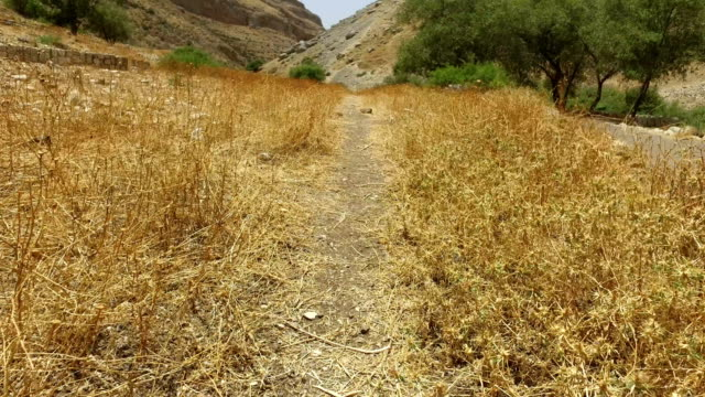 Dirt Path Through Dry Field in Israel video