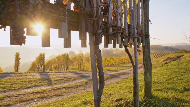 ds grusväg längs vinodlingar vid solnedgången - steiermark bildbanksvideor och videomaterial från bakom kulisserna