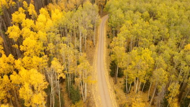 vídeos de stock, filmes e b-roll de estrada de terra que corta através da floresta de aspen em colorado - condado de pitkin