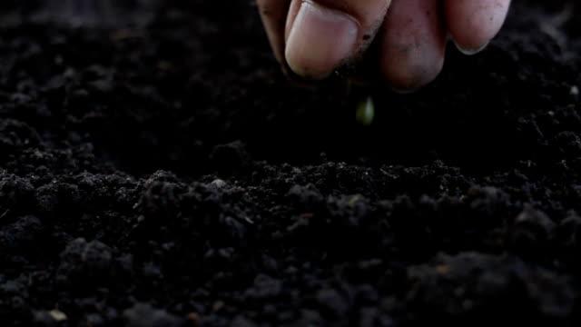 vídeos de stock e filmes b-roll de dirty hand seeding vegetable seed on soil - semente