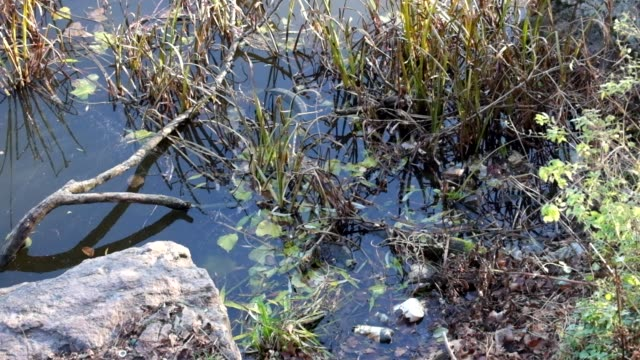 Dirty water of the Southern Bug River video