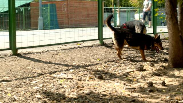 vídeos de stock e filmes b-roll de disabled dog running near the fence - três objetos