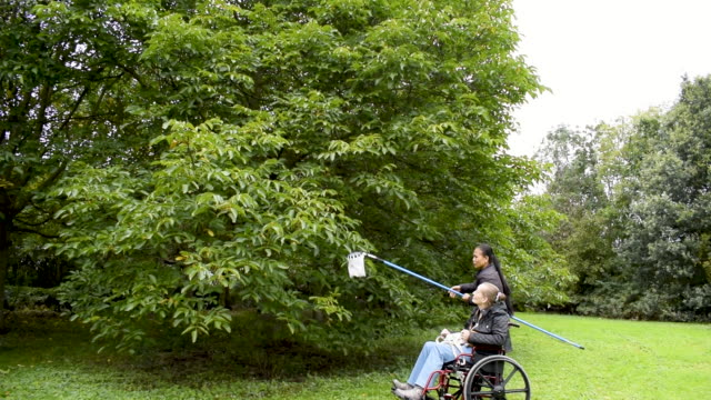 Disabled Female and Asian Friend Picking Walnuts, Caregiver, Carer, Real, Healthcare