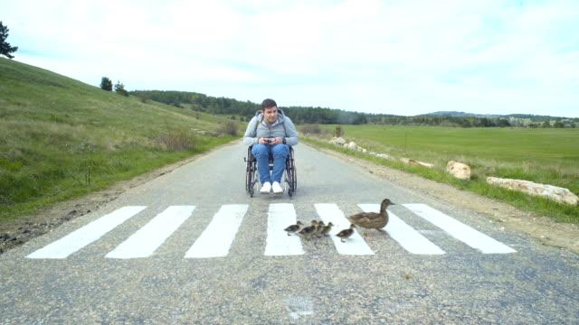 инвалидов человек вид на мать утка и утки - утка водоплавающая птица стоковые видео и кадры b-roll