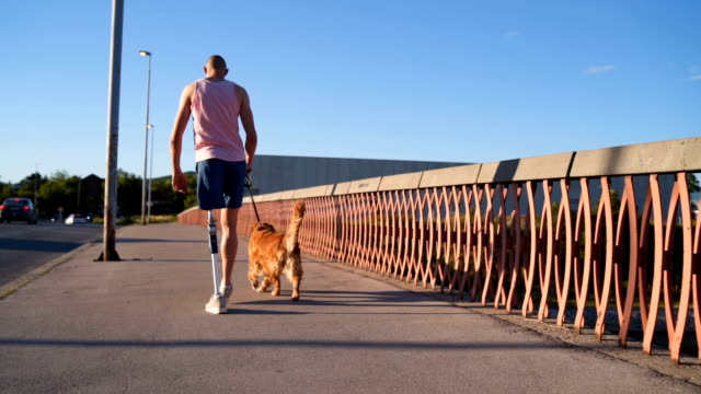 Disabled young man walking his dog A man with prosthetic leg, walking a dog, playing tenis and basketball prop stock videos & royalty-free footage