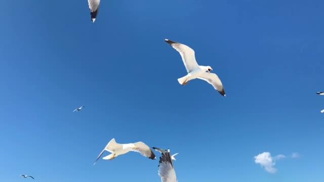 disagreeing seagulls flying - fianco a fianco video stock e b–roll