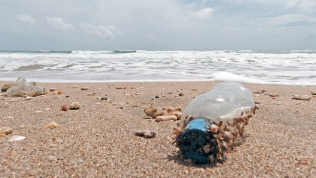 Discarded plastic water bottle pollution on the beach