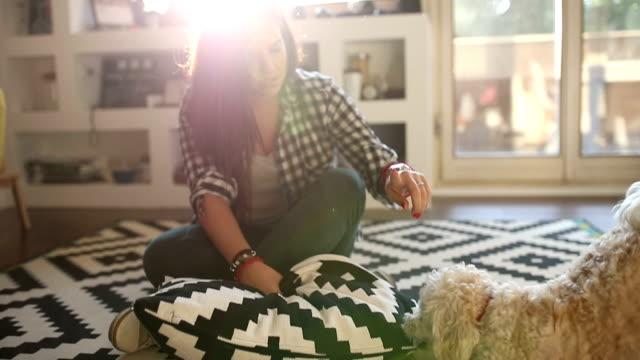 vídeos de stock e filmes b-roll de cão disobedient - puxar cabelos
