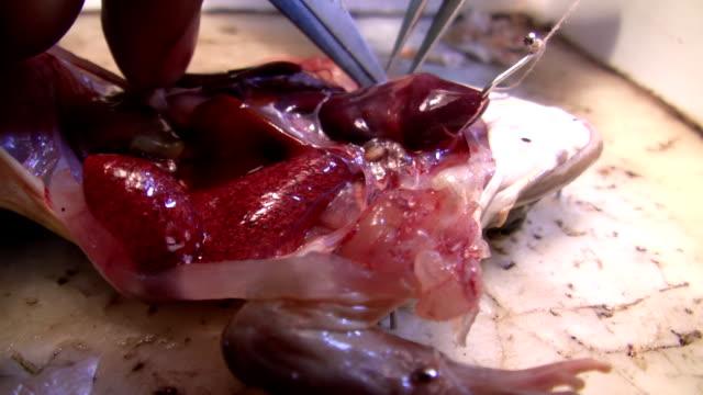 vidéos et rushes de dissection - étudiant(e)