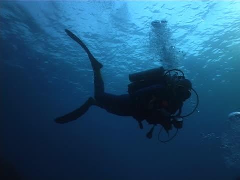vídeos de stock, filmes e b-roll de mergulhador 05 pal - equipamento de esporte aquático