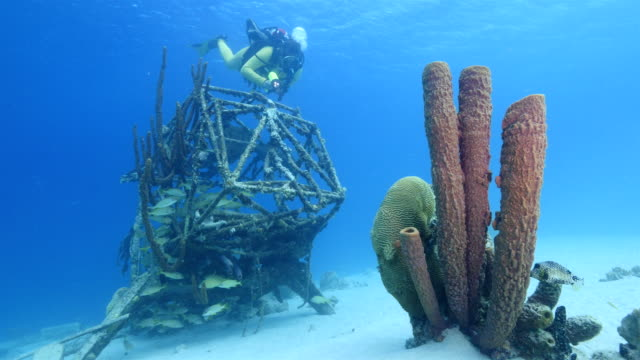 Diver at plane wreck in the Caribbean Sea around Curacao with big sponge in foreground diver inspects wreck at scuba dive around Curaçao /Netherlands Antilles diving to the ground stock videos & royalty-free footage