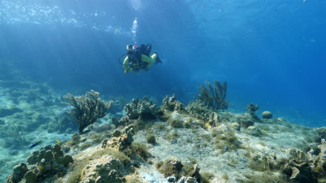 Diver at the coral reef in the Caribbean Sea around Curacao diver inspects reef at scuba dive around Curaçao /Netherlands Antilles diving to the ground stock videos & royalty-free footage