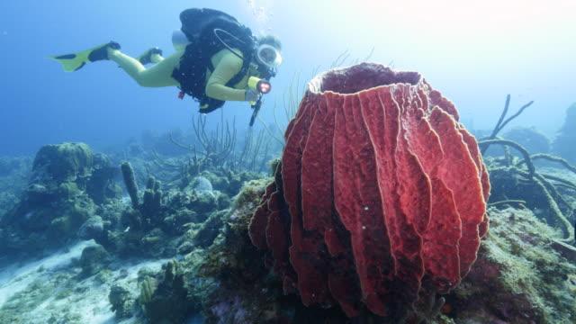 taucher am korallenriff in der karibik auf curacao mit großen schwamm im vordergrund - sporttauchen stock-videos und b-roll-filmmaterial