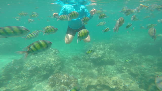 Diver swimming among tropical fish in undersea video