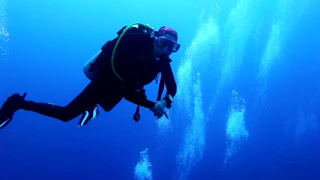 diver плавательный over коралловый риф - дайвинг стоковые видео и кадры b-roll