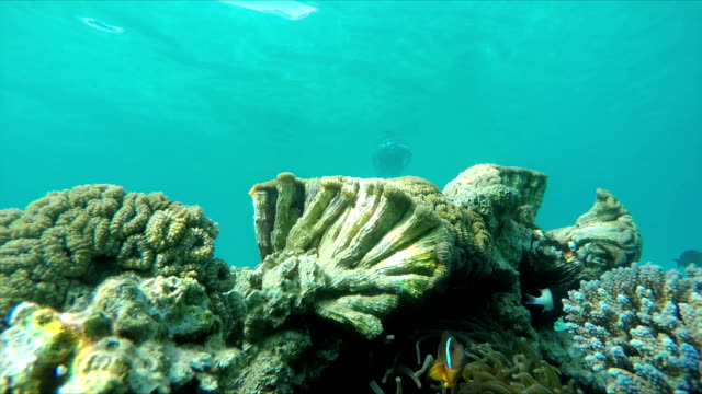 Diver swimming to a coral reef Diver swimming to a coral reef with tropical fish coral cnidarian stock videos & royalty-free footage