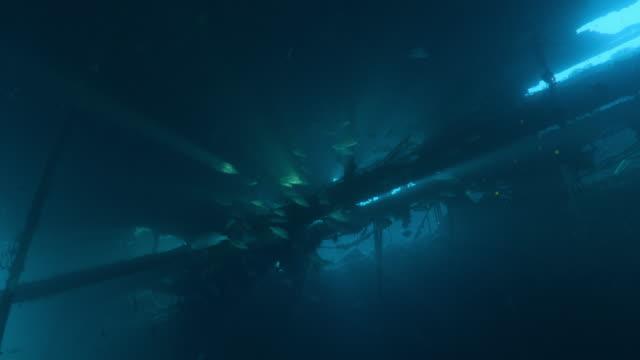 dykare simmar i ett skeppsbrott med en skola av fis, tomates grunts, north carolina, aug. 2016 - atlanten bildbanksvideor och videomaterial från bakom kulisserna