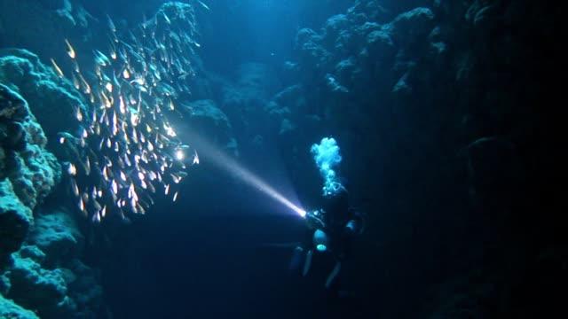 taucher schwimmt in der höhle - sporttauchen stock-videos und b-roll-filmmaterial