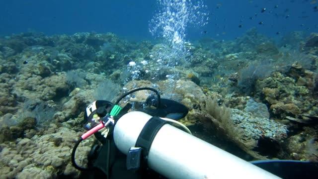 diver takes clownfish photo - 氧氣筒 個影片檔及 b 捲影像