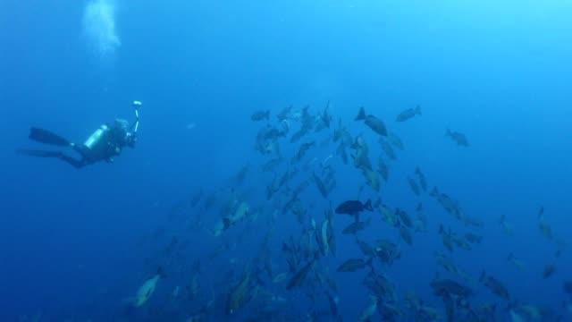 diver принимает фотографии с двумя место красный снапперс - луциан стоковые видео и кадры b-roll