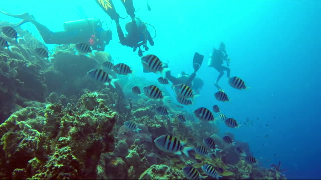 A divers regrouping at the reef. Divers exploring coral reef A divers regrouping at the reef. Divers exploring coral reef pacific islands stock videos & royalty-free footage