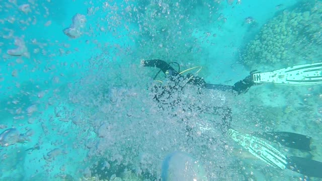 Divers swim underwater near the seabed. Two datsvers swim underwater along a coral reef. Air bubbles move up to the surface of the water. aqualung diving equipment stock videos & royalty-free footage