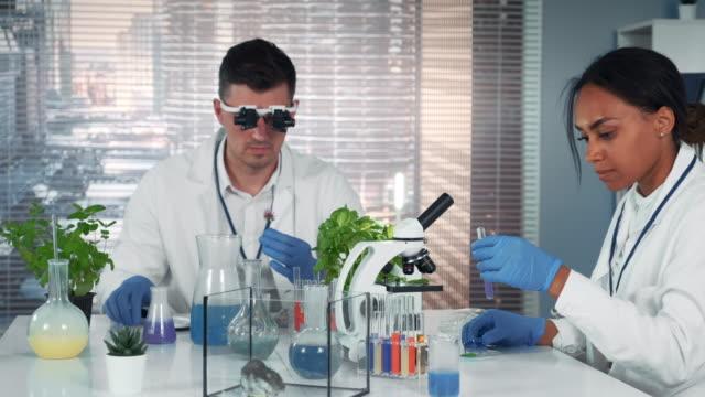 vídeos de stock, filmes e b-roll de peritos diversos da pesquisa que trabalham com materiais orgânicos no laboratório brilhante moderno da química - amostra científica