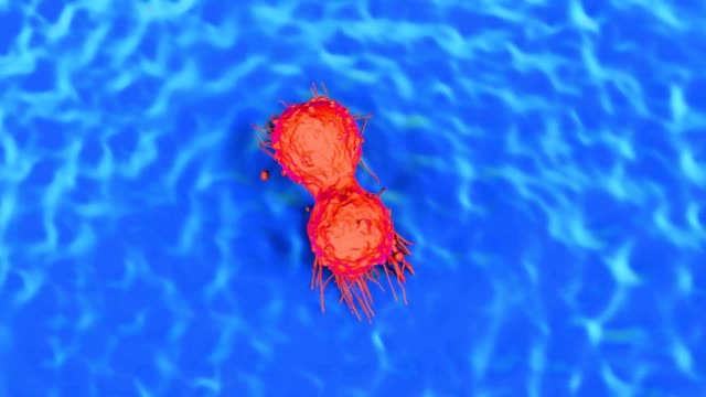 Dividing breast cancer cell video