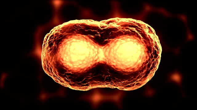 stockvideo's en b-roll-footage met dividing cells or mitosis orange - splitsen