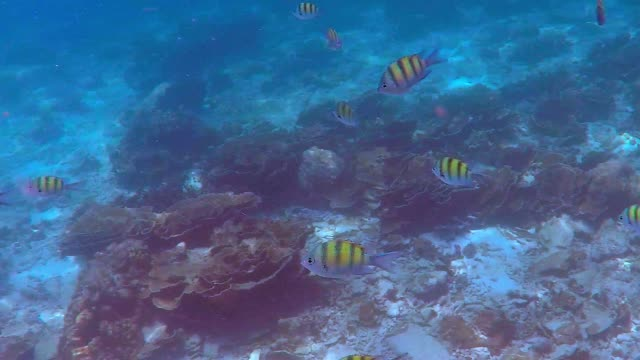 Diving at Phi Phi Islands, Thailand Snorkeling in the Underwaterworld at Phi Phi Islands, Thailand, Asia southeast stock videos & royalty-free footage