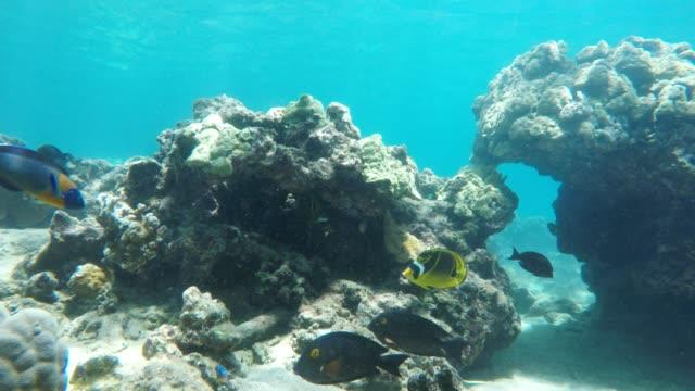 vídeos y material grabado en eventos de stock de buceo bahía de honolua - tubo