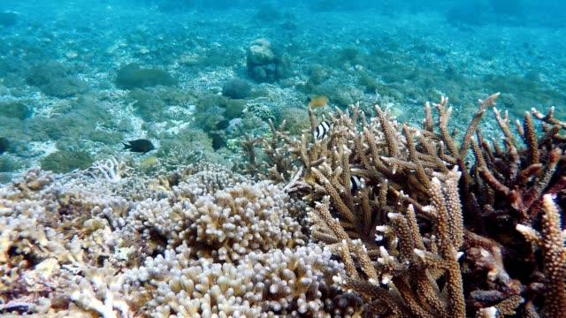 Diving in indian ocean, Indonesia video