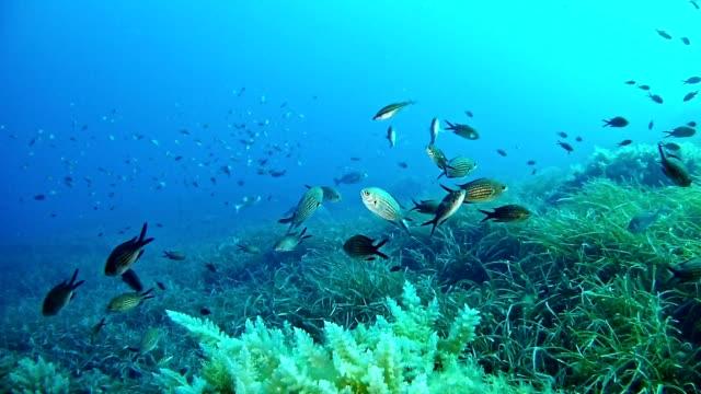 diving in the mediterranean sea - mar mediterraneo video stock e b–roll