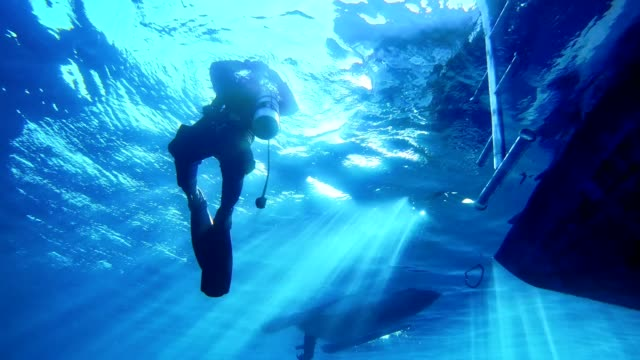 Diving into deep sea. Jumping from a boat Boat shoot. Splashing seawater. Diving trip aqualung diving equipment stock videos & royalty-free footage